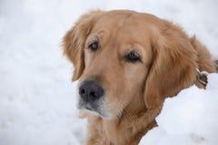 Apprécier la neige dans l'horaire d'hiver Images stock