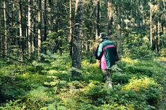 Apprécier la vue de forêt Marche dans la chasse de champignon de personne de forêt dans la forêt d'été pendant le matin photo stock
