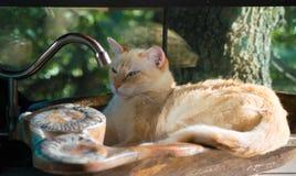 Apprécier un évier en pierre frais un après-midi chaud photographie stock