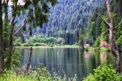 Appréciez la vue du lac rouge Roumanie images libres de droits