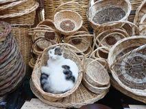 Appréciez le chat dans le panier en osier photos stock