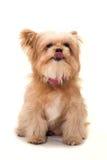 Appréciez le chien photo libre de droits
