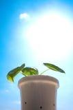 Appréciez le soleil Image stock