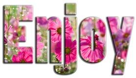 Appréciez les fleurs roses photo libre de droits