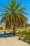 Appréciez les mosaïques romaines en EL Djem photos stock