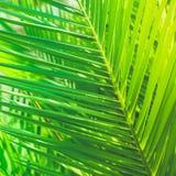 Appréciez un rêve tropical images stock