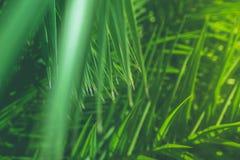 Appréciez un rêve tropical image libre de droits