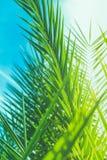 Appréciez un rêve tropical photo stock