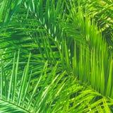 Appréciez un rêve tropical image stock