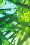 Appréciez un rêve tropical photo libre de droits