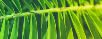 Appréciez un rêve tropical photographie stock