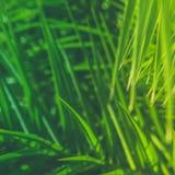 Appréciez un rêve tropical photos stock