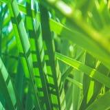 Appréciez un rêve tropical photographie stock libre de droits
