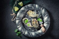 Appréciez vos huîtres avec la coriandre et les citrons Images libres de droits