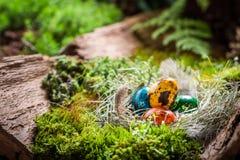 Appréciez votre temps de Pâques dans la forêt verte image libre de droits