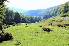 Appréciez votre voyage avec des montagnes de Carpathiens, beauté du village photo stock