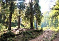 Appréciez votre voyage avec des montagnes de Carpathiens, beauté du village photos libres de droits