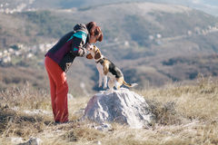 Apprendimento del cane da lepre Immagine Stock Libera da Diritti