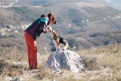 Apprendimento del cane da lepre Fotografia Stock