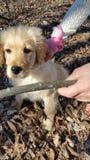 Apprendimento del cucciolo Fotografia Stock