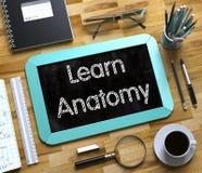 Apprenez l'anatomie manuscrite sur le petit tableau 3d Images libres de droits