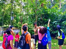 Apprezzamento della natura nel parco naturale di Bukit Batok, Singapore Immagine Stock