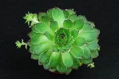 Apprezzi la pianta Fotografia Stock Libera da Diritti