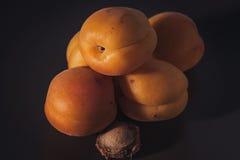 Appricot Royaltyfri Bild