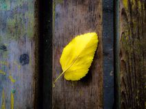 Autumn background. Yellow Lonely leaf Stock Photo