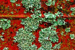 Approach of a rusted metal plate with lichens growing. Abundant growth of fungi royalty free stock photography