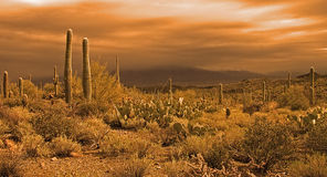 Approaching desert storm. Golden light of an approaching storm over the Sonoran desert near Tucson, Arizona Royalty Free Stock Photo
