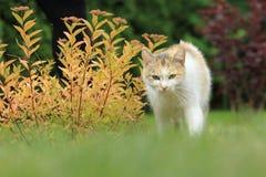 Approaching in garden Stock Photos