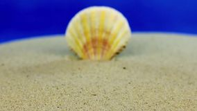 Approaching seashell sticking out of the sand, close-up. Dolly shot stock video footage