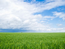 Approaching Spring Storm and Winter Wheat. Sudden spring storm approaching a field of winter wheat Royalty Free Stock Photo