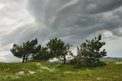 Approaching storm in the mountains. Dramatic storm scene with pines on the mountain pasture Royalty Free Stock Photography