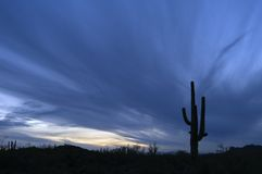 Approaching Storm and Saguaro Cactus royalty free stock image
