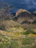 Approaching storm in the Santa Catalina Mountains, southern Arizona. The precursor of a typical short but spirited Sonoran Desert thunderstorm Royalty Free Stock Images