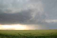 Approaching Thunderstorm over wheat field Stock Image