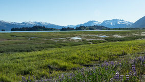 Approaching Valdez. Fields, mountains, and waters near Valdez, Alaska Stock Images