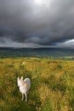 Approcci della tempesta Fotografie Stock Libere da Diritti