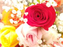 approche de la disposition des roses de diverses couleurs vues d'en haut Images stock