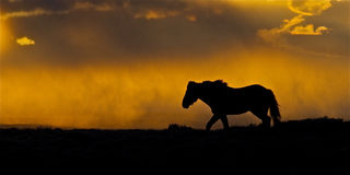 Approching Storm. Wild mustang at sunset over the white mts in Wyoming. Billowing, powerful thunderhead Orange, blue, cloud, thunderstorm, horse, silhouette Stock Image