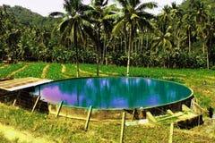 Approvisionnement en eau pour la plantation de maïs photographie stock libre de droits