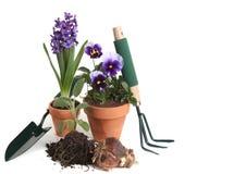 Approvisionnements de jardin en pensées, jacinthe, sauge Photo stock