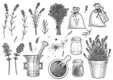 Approvisionnements en illustration de collection de lavande, dessin, gravure, encre, schéma, vecteur illustration libre de droits