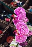 Approvisionnements et orchidée de couture Images stock