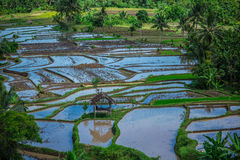 Agricultural fields in the jungle in Indonesia 2 Stock Photo