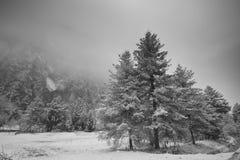 Après arbre de neige Images libres de droits