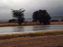 Après avoir plu l'arbre de ressortissant et de route après pluie Images stock