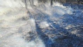 Après brouillard du feu d'herbe, dommages de nature et concept de destruction écologique banque de vidéos